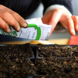 Пдоготовка семян к посадке